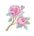Watercolor chinese peony flower vector image vector image