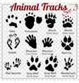 Animals Tracks - set vector image vector image