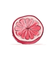 Sketch of grapefruit for your design vector image