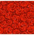 red rose background vector image vector image