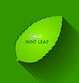 Mint leaf vector image