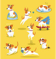 cute jack russell terrier set funny pet dog vector image