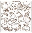 fruits sketch icons farm fresh exotic vector image