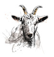 Colored hand sketch of goat head vector image