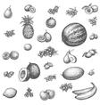 Sketch doodle hand-drawn set fruit vector image