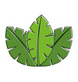 tropical leaves of palm tree flora image vector image