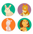 bright images of domestic animals cat rabbit dog vector image