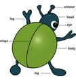 Cartoon bug vector image vector image