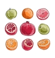 Set of fruits sketch for your design vector image vector image
