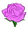 purple rose vector image