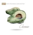Watercolor of avocado No vector image