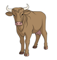 cow isolated on a white background vector image