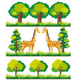 giraffe in the park vector image