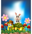 Tortoise and hare vector image vector image