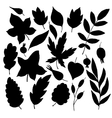 silhouettes of leaves and berries vector image