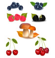 group of berries vector image vector image