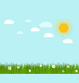 spring green grass and chamomile landscape vector image