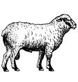 shropshire sheep vector image vector image