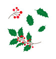 flat holly tree leaves branch berry set vector image