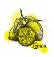 hand drawn lemon icon vector image
