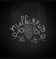 mulberry sketch vector image