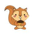cute squirrel icon vector image