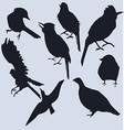 a set of dark silhouettes of birds vector image