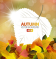 autumn background with a card vector image