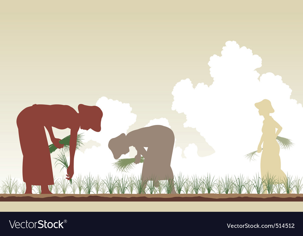 Rice planters vector