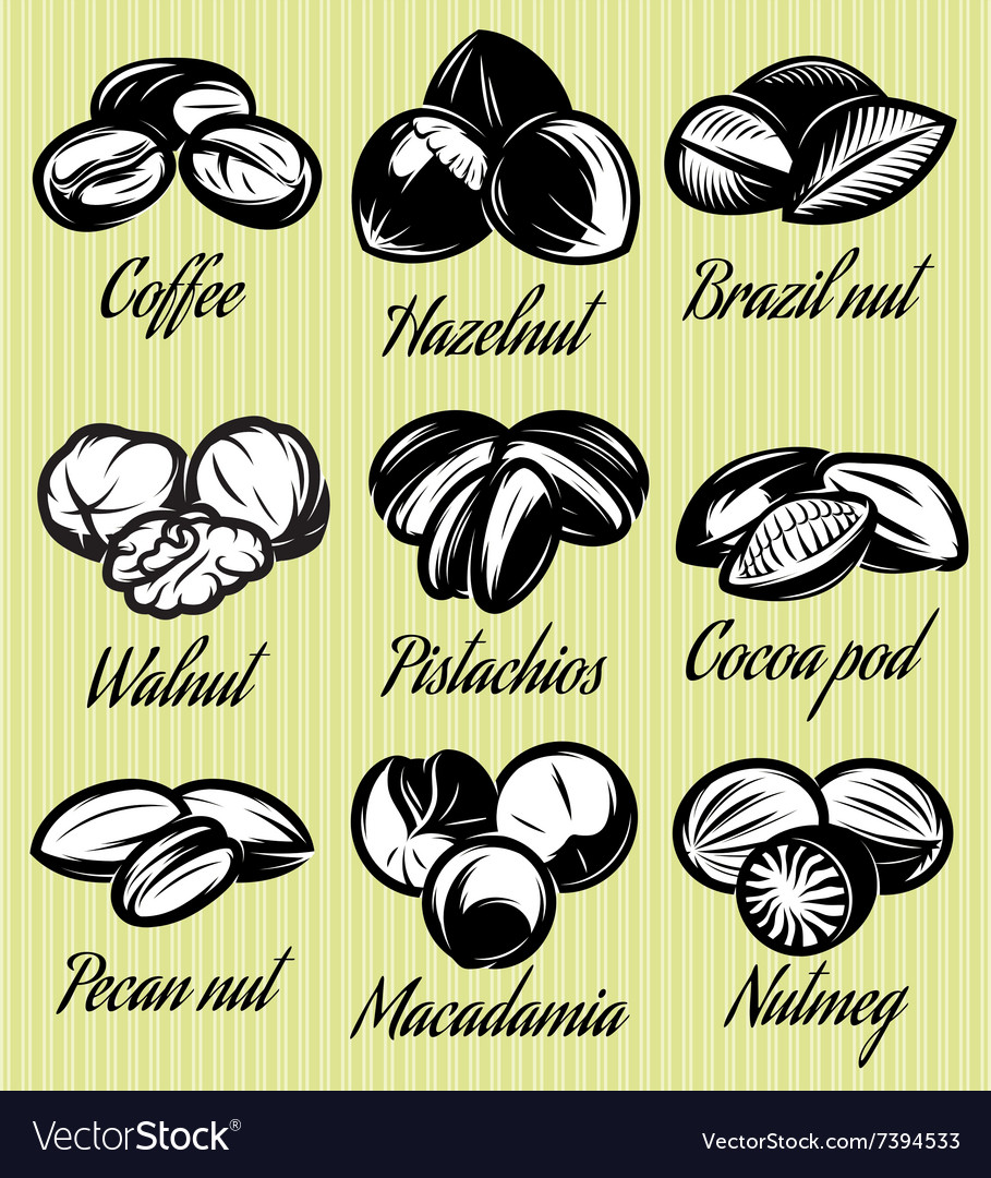Set of symbols patterns different seeds nuts vector