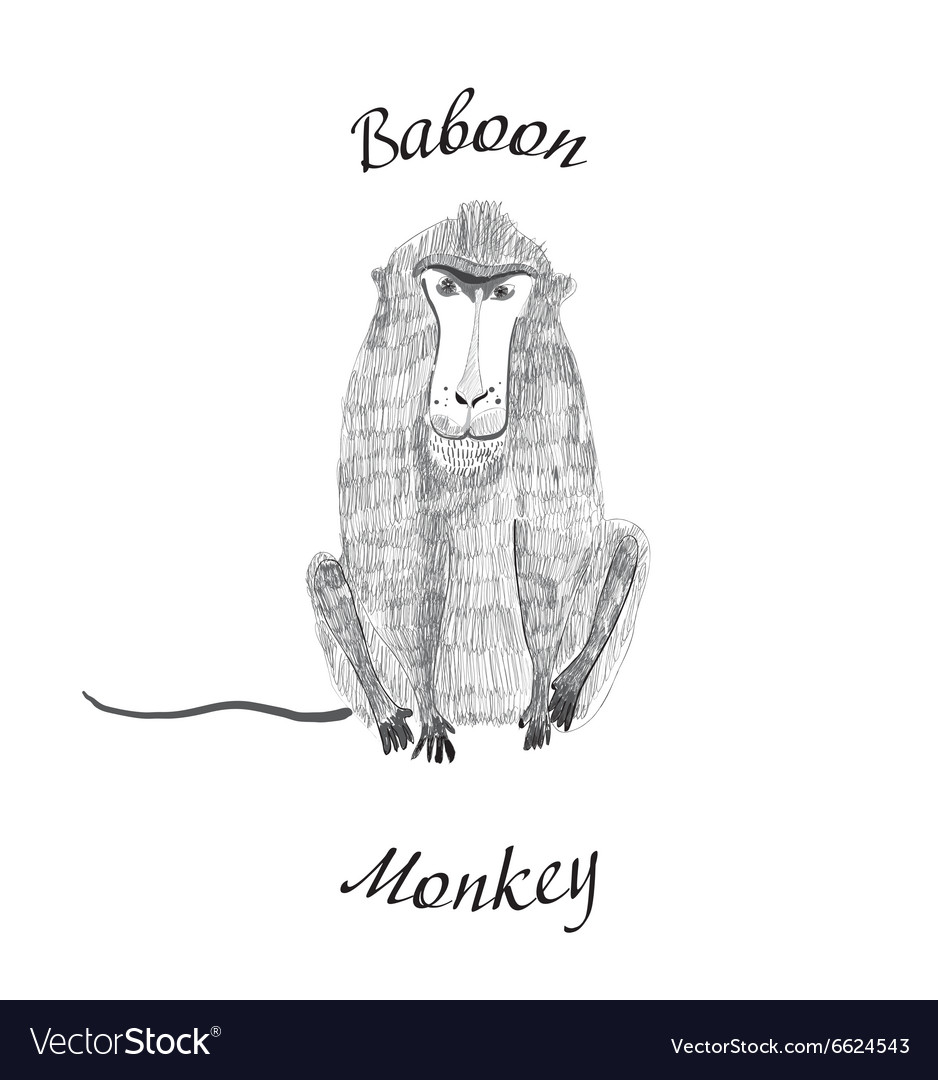 Baboon monkey vector