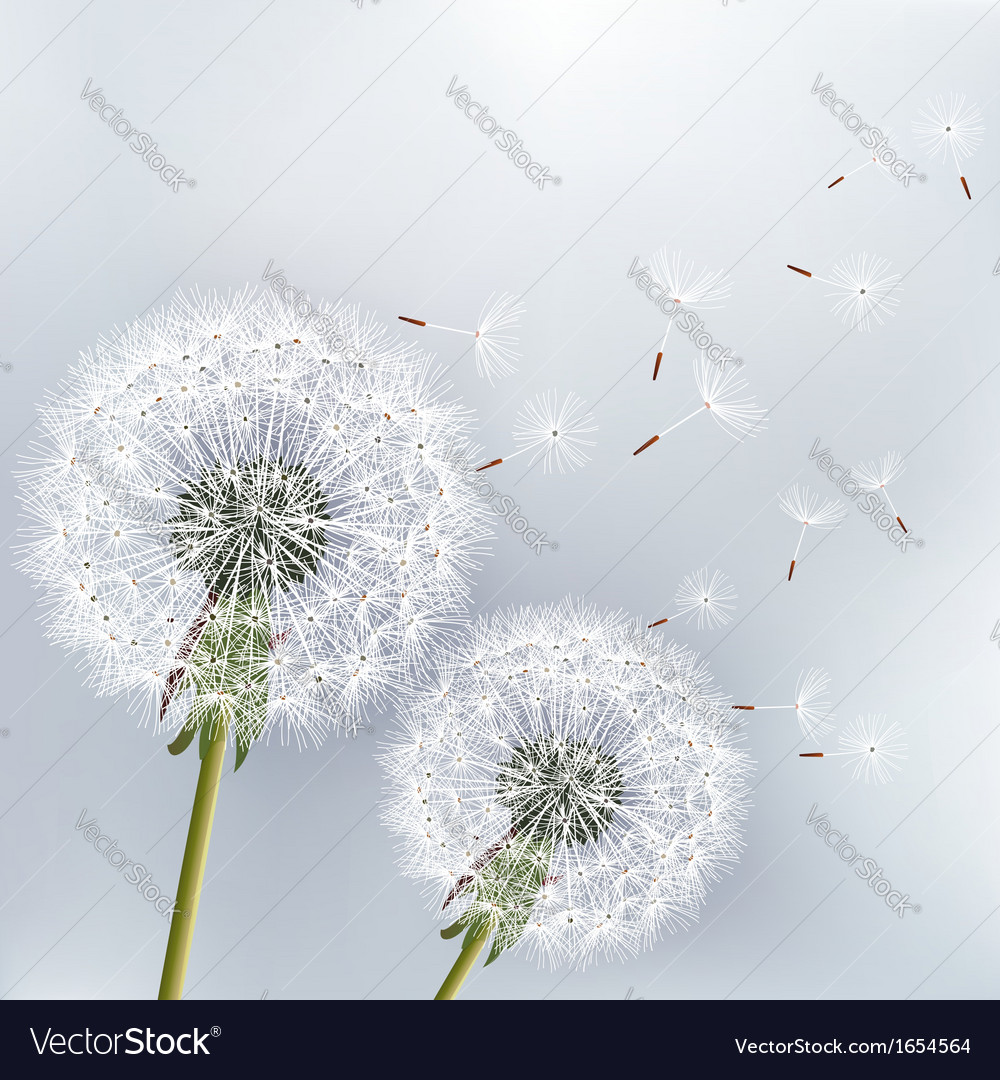 Stylish floral background with flower dandelion vector