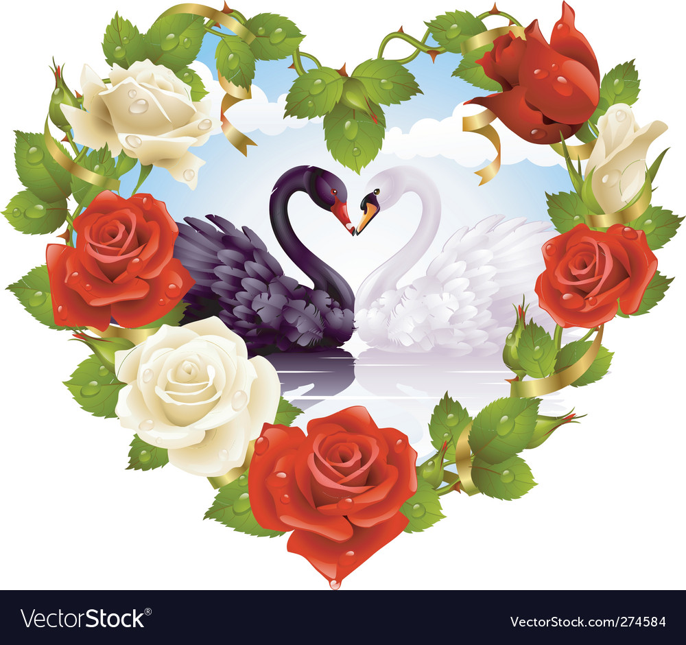 Red roses and couple swans vector