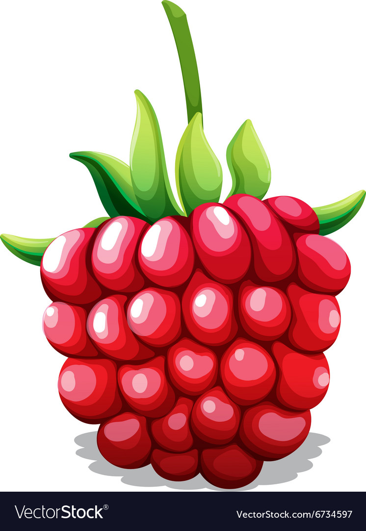 Fresh rasberry with green stem vector