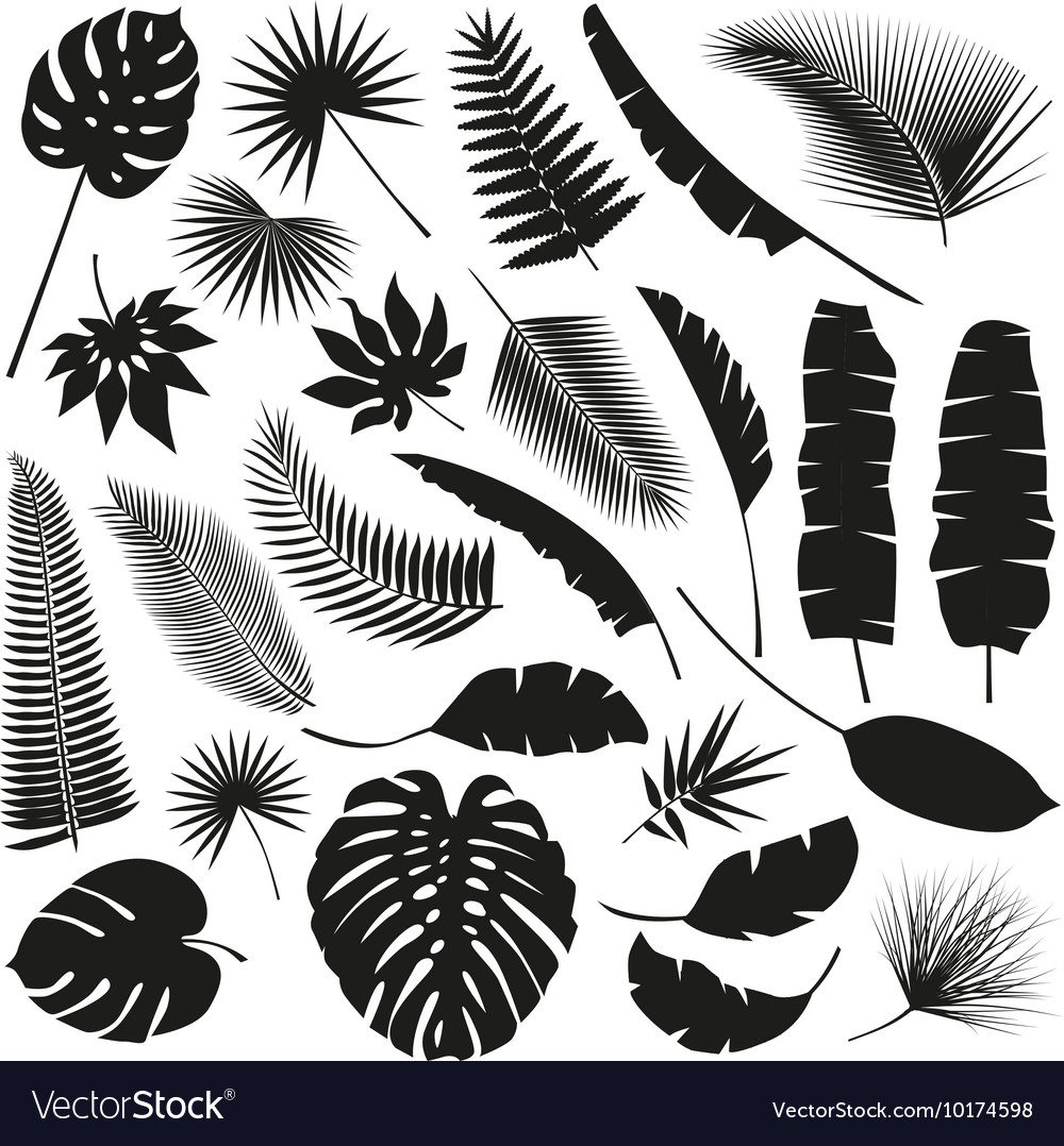 Black tropical leaves collection isolate vector