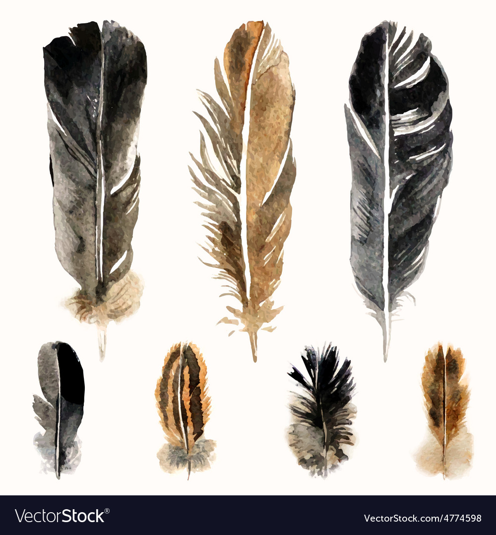 Hand drawn watercolor feathers vector