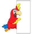 Macaw bird cartoon with blank sign vector image