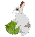 rabbit with cabbage vector image vector image