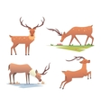 Cartoon deer animal vector image