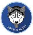 Head of siberian husky with long shadow vector image