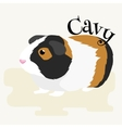 Happy Pets home animals guinea pig on the white vector image