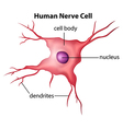 Human nerve cell vector image