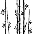 Bamboo branches isolated on the white background vector image