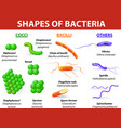 Types of bacteria vector image vector image