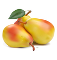 Pears with leaf vector image vector image
