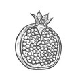 pomegranate fruit berry vector image