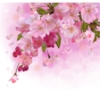 Pink card with cherry branch of flowers vector image