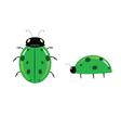 green ladybug vector image