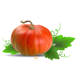 Orange Pumpkin with leaves vector image vector image