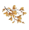 autumn oak leaves branch vector image